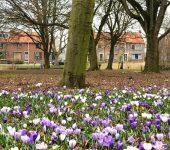Historische Vereniging Moordrecht: beeldentuin Drost IJsermanpark